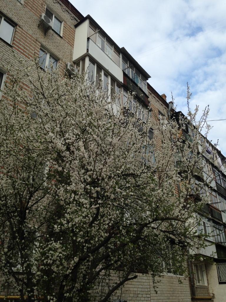 photo 1 (3)